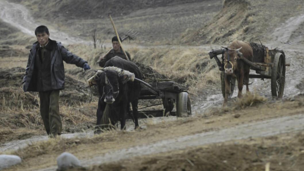 <strong>FATTIGE:</strong> En mann med en oksekjerre i Paeksan-ri i Kumya County. Foto: Olav A. Saltbones / Røde Kors