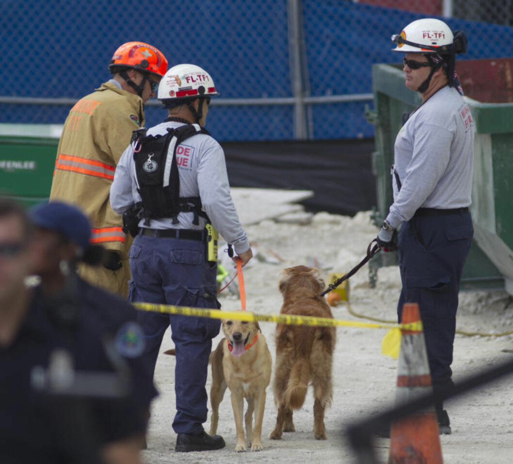 <strong>BRUKER HUNDER I SØKET:</strong> Redningsarbeidere bruker hunder i søket etter personer i ruinene. Flere personer er savnet etter at parkeringshuset i Miami kollapset. Foto: J PAT CARTER / AP PHOTO / NTB SCANPIX