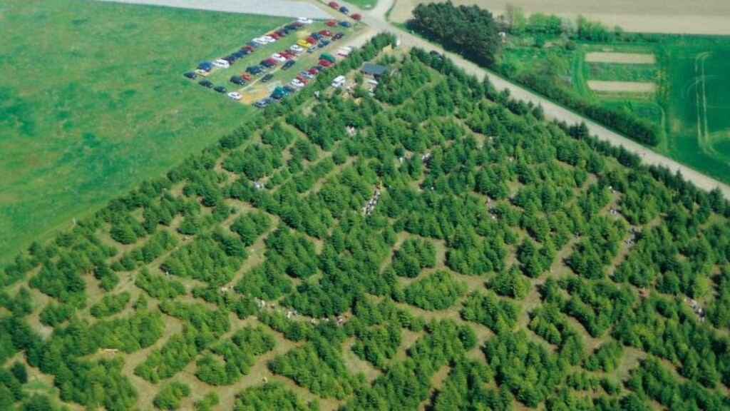 VERDENS STØRSTE LABYRINT: Labyrinten på Samsø er 60 000 kvadratmeter stor. Foto: SAMSOLABYRINTEN.COM