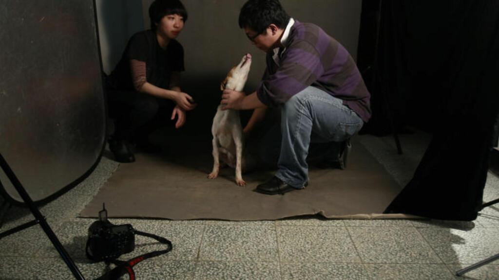 FØLESESLADET JOBB: Tou Chih-kang roer ned en begeistret hund før den skal fotograferes. Minutter senere vil den bli avlivet. Det er en følelsesladet jobb, men fotografen vil bevisstgjøre folks måte å eie og behandle hund på. Foto: WALLY SANTANA / AP Photo / NTB SCANPIX