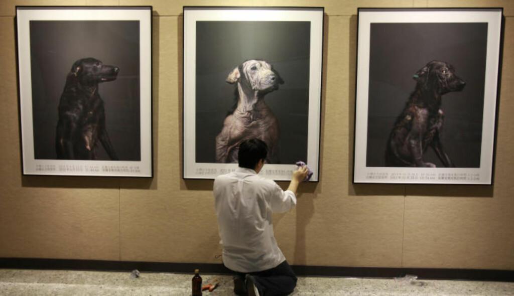 EN VERDIG AVSLUTNING: Fotografen ønsker at innbyggerne i byen skal respektere kjæledyrene sine mer. Til sammen har han fotografert over 400 hjemløse hunder som skal avlives. Nå skal han holde en utstilling med noen av bildene. Foto: WALLY SANTANA / AP Photo / NTB SCANPIX
