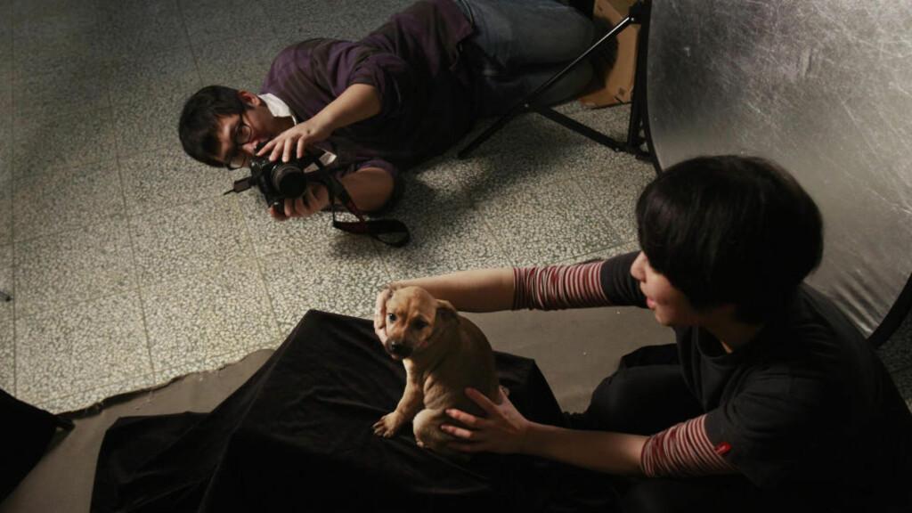 SKAL AVLIVES: Fotografen Tou Chih-kang plasserer forsiktig den lille hundevalpen foran kameraet i sitt provisoriske studio på et hundehjem i Taoyuan. Hunden er ikke eldre enn et par måneder. Rett etter bildet er tatt blir den lille valpen avlivet. Foto: WALLY SANTANA / AP Photo / NTB SCANPIX