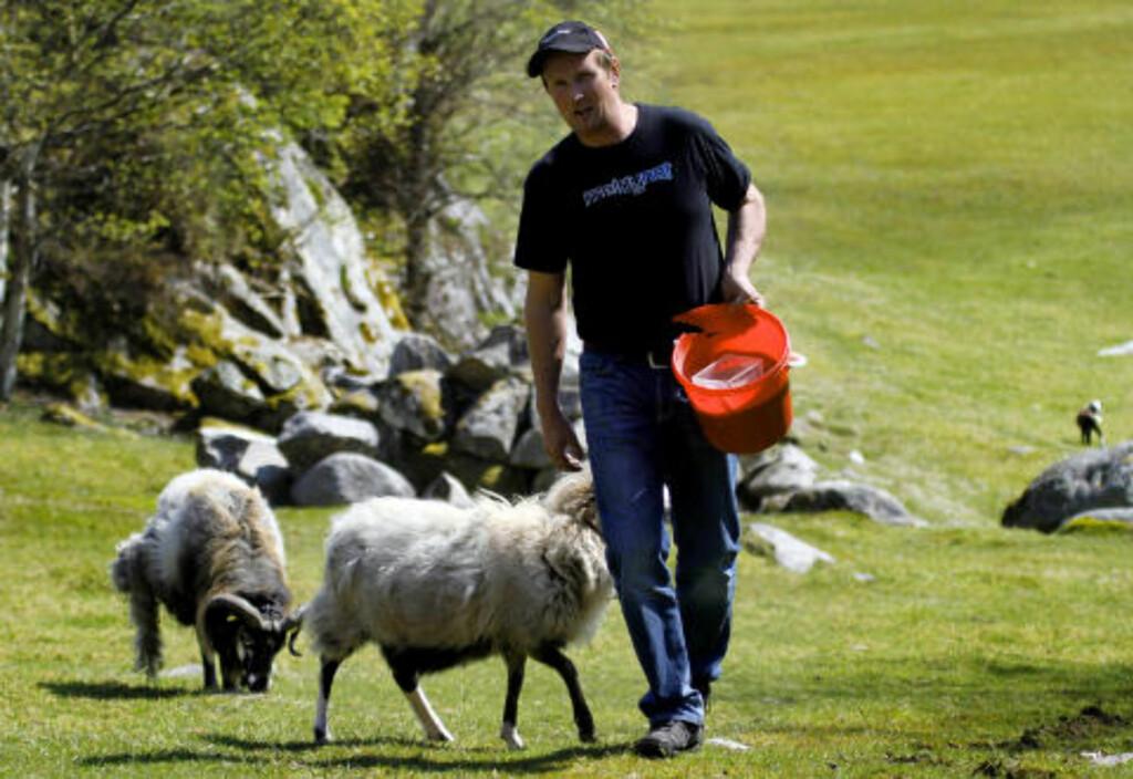 VILLSAUBONDE: John Vik er glad i havørna, den spiser fisk og ikke lam.