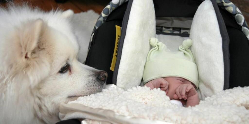 GODE VENNER?: Alle ønsker at barn og hund skal ha et godt og harmonisk forold, men da bør du også ha klare regler i hjemmet. Foto: Istockphoto