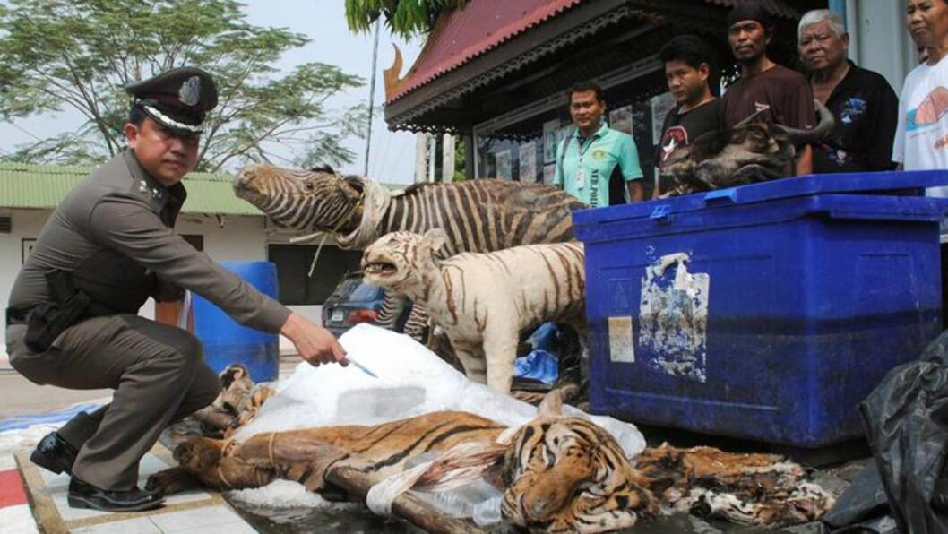 <strong>STORFANGST:</strong> En mann som gikk på 7/11 med blodige hender ledet politiet til en leilighet med tiger, elefant og sebra - smuglet til Thailand, og gjort klar for salg. Foto: EPA/Scanpix