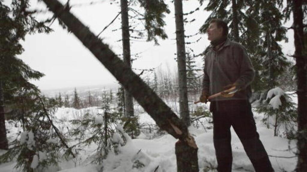 OVER ENDE: Her går treet over ende - og neste vinter skal det varme forfatteren og hans familie. Foto: Anders Grønneberg