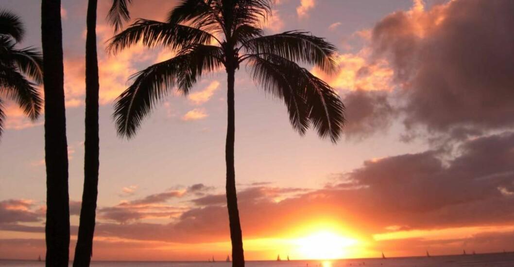 <strong>PARADIS:</strong> Hawaii er forståelig nok best kjent for sine strender og vakre solnedganger. Foto: TOM HELGESEN