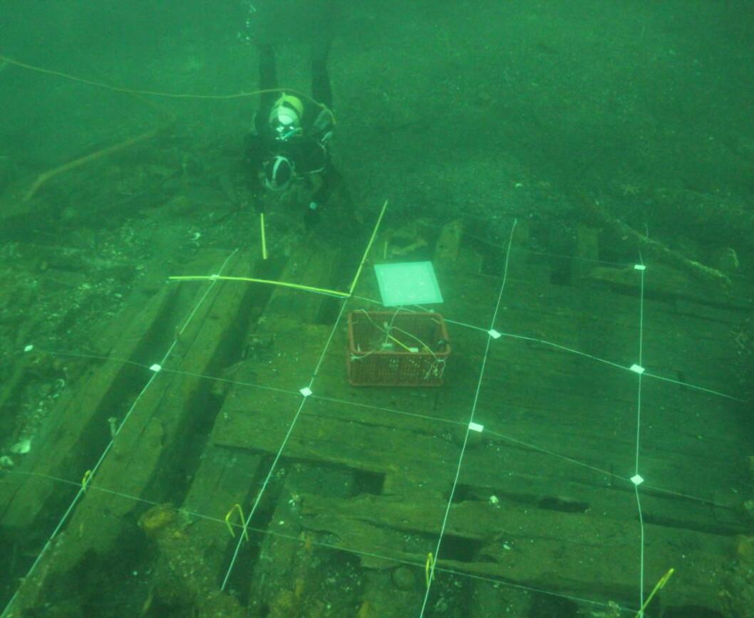 <strong>ÅSTEDET:</strong> Vraket ble først påvist i forbindelse med reguleringsarbeid i havneområdet i fjor, da dykkere fant noen kobberbolter som stakk opp fra sanden. Nå har arkeologene gravd opp godt bevarte deler av skuta som trolig sank på slutten av 1800-tallet. Florvåg var på den tida et ankringsområde for skip. Foto: Eirik Herdlevær Søyland/Bergens Sjøfartsmuseum