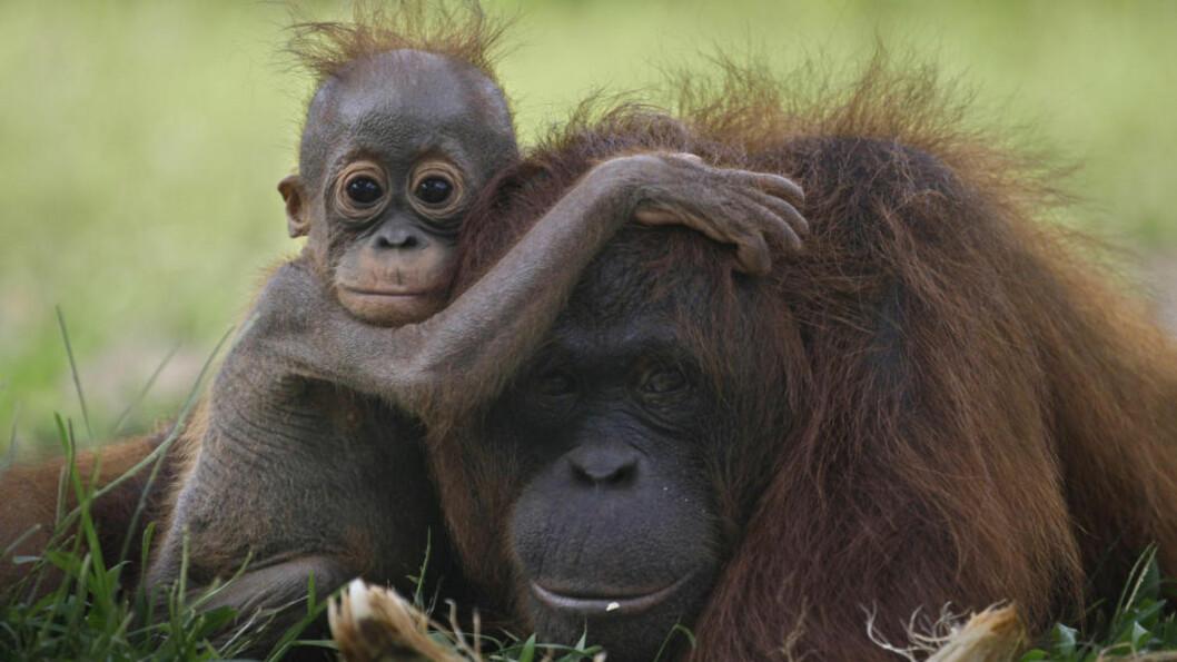 <strong>VELLYKKET:</strong>  «Regnskogprogrammet er det mest vellykkede klimatiltaket i verden», skriver Erik Solheim. Dette bildet er fra regnskog i Indonesia, der Norge også er involvert. Foto: Dita Alangkara/AP/Scanpix