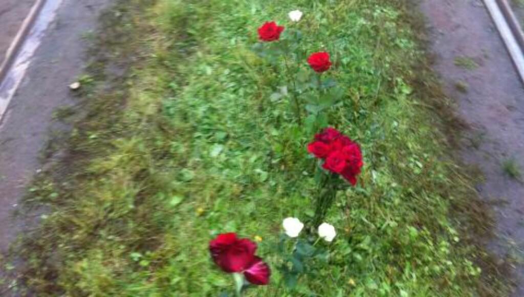 ROSESTI:Mellom trikkeskinnene ble det laget en sti av roser. Foto: Lise Grønslar