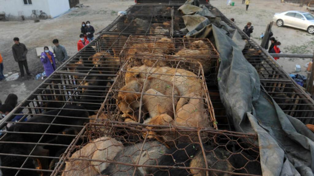TRANGT: I lastebilen var det om lag 500 hunder. Foto: Scanpix