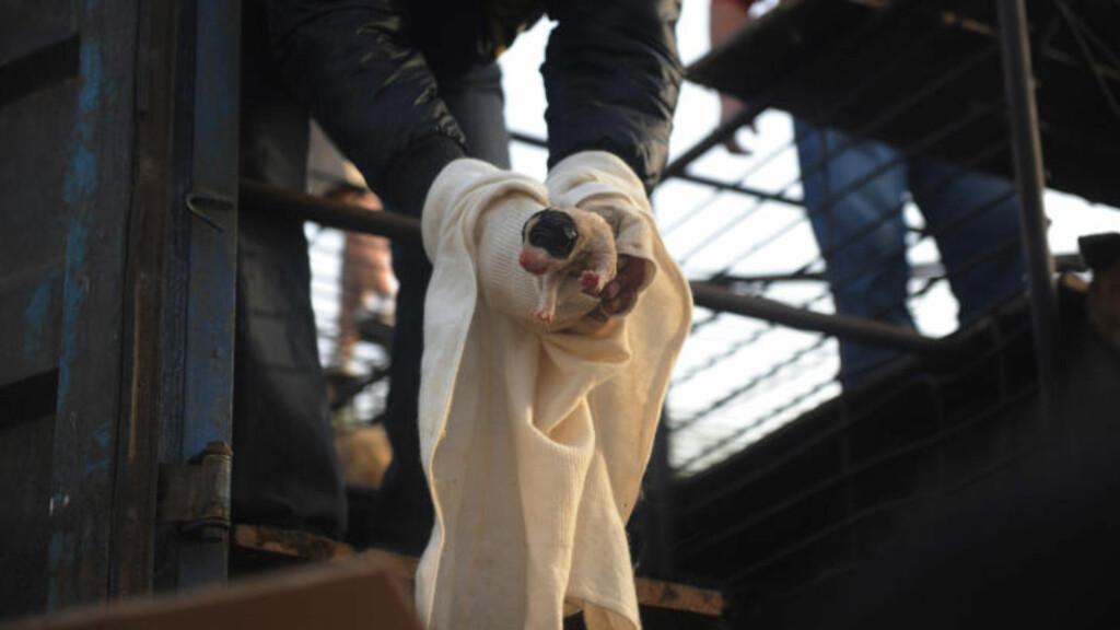 LYSERE FRAMTID:: Inntill lastebilkonvoien ble stoppet så framtida mørk ut for de 500 kinesiske hundene. Nå blir de tatt hånd om av kinesisk dyrevernere. Foto: Scanpix