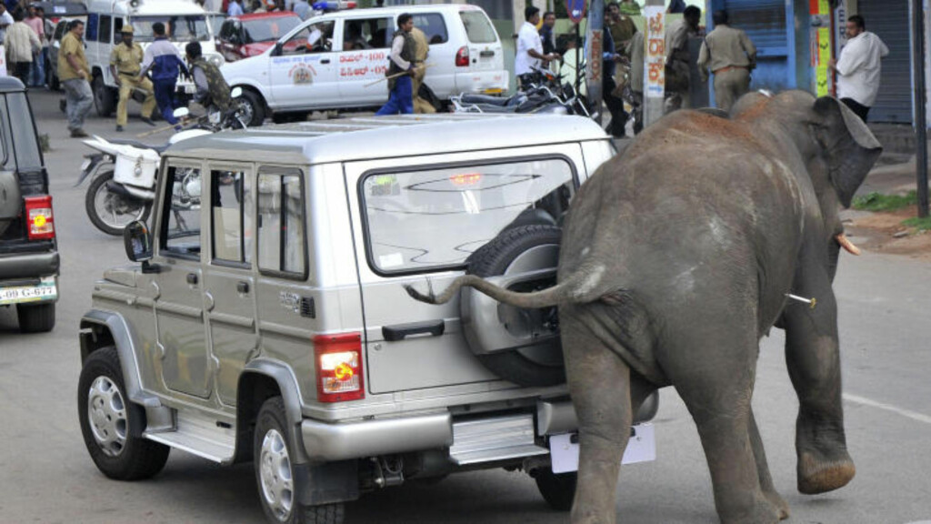 ANGREP BILER: Heller ikke biler slapp unna den ville elefanten. Her er den skutt med bedøvningspiler, men effekten har ennå ikke slått inn. Foto: AFP PHOTO/STR/SCANPIX