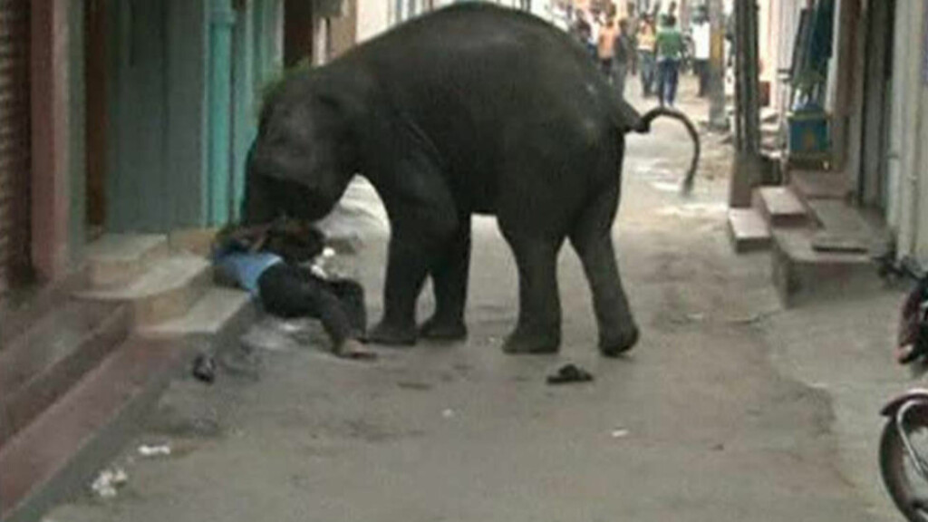 ELEFANTANGREP: Denne mannen kommer seg ikke unna den voldelige elefanten. Det er ikke klart om det var denne mannen som ble drept i angrepet. Foto: REUTERS/ANI via Reuters TV /Scanpix