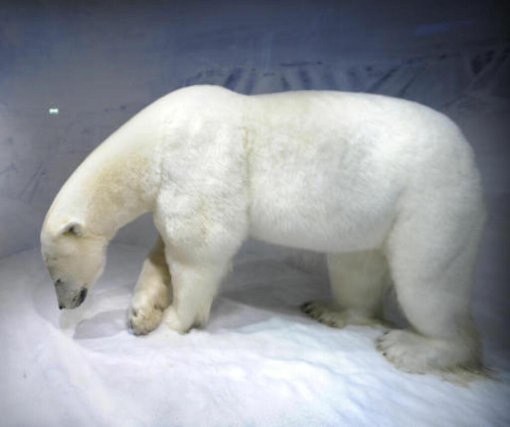 KOLBJØRN: Mange barn synes det er mest moro å hilse på isbjørnen Kolbjørn. Foto: JOHN TERJE PEDERSEN