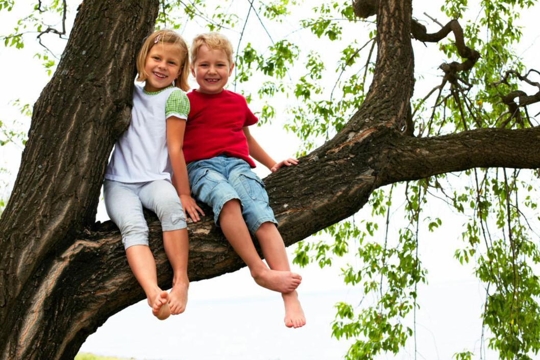 <strong><b>VIL HA FORBUD MOT DETTE:</strong></b> Noen foreldre mener det bør være forbudt å klatre i trær i barnehagen. Foto: Shutterstock.com ©