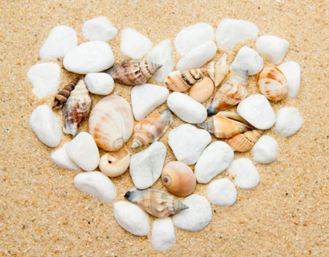 Finn skatter på stranda. Dette kan du lage mye fint av! Foto: Shutterstock.com
