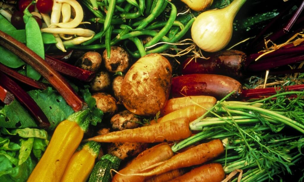 HVERT SITT BRUK: Noen ganger passer det med grønnsaker som har litt størrelse. Men små grønnsaker har en rekke fordeler. De vokser fortere, smaker ofte bedre, du slipper rester - og bonden får flere avlinger pr sesong. Foto: DAVID TROOD/BAM /SAMFOTO