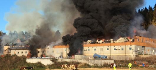 Fjøs med over 200 dyr i står i brann i Moelv