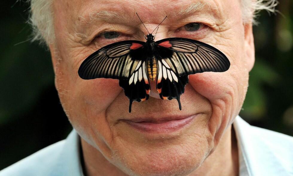 Nær naturen: I seksti år har Sir David Attenborough vært vår utsendte til naturens mest bortgjemte kroker. I en alder av 90 år er han fortsatt ute på oppdrag.
