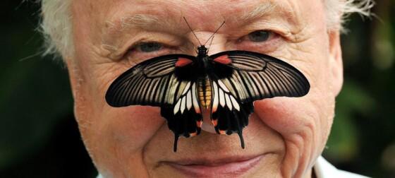 Sir David Attenborough ble fullstendig overveldet