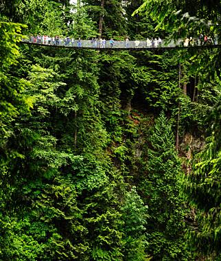 SPEKTAKULÆRT: Hengebrua over Capilano-elva utenfor Vancouver besøkes av 800.000 mennesker i året. Foto: Shutterstock / NTB SCanpix