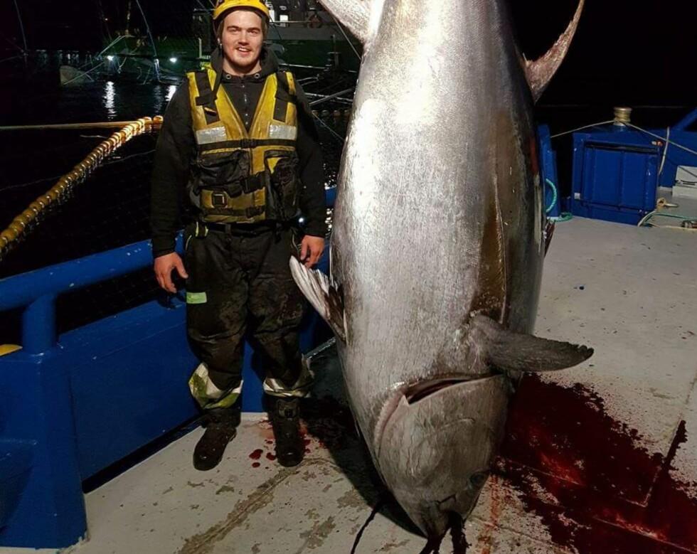 ENORM: Anders Strøm, driftsleder på Salmar-anlegget, sier han ble sjokkert da skjønte hvor stor fisken var. Her er dykker Kristian Eriksen (25) ved siden av krabaten som ble tatt opp i går. Foto. Pia Finnanger.