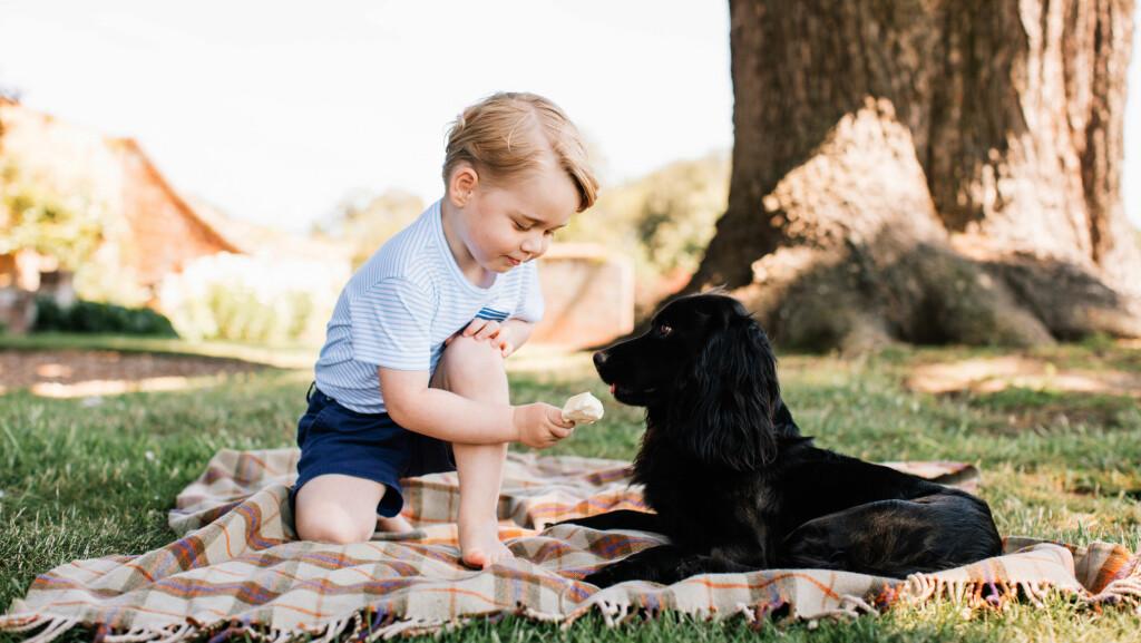 FYLLER TRE ÅR: I anledning prins George sin treårsdag fredag 22. juli, har Kensington Palace offentliggjort flere flotte bilder av den lille prinsen. På bildene koser han seg hjemme i hagen på Anmer Hall i Norfolk. Foto: Matt Porteous/ Pa Photos