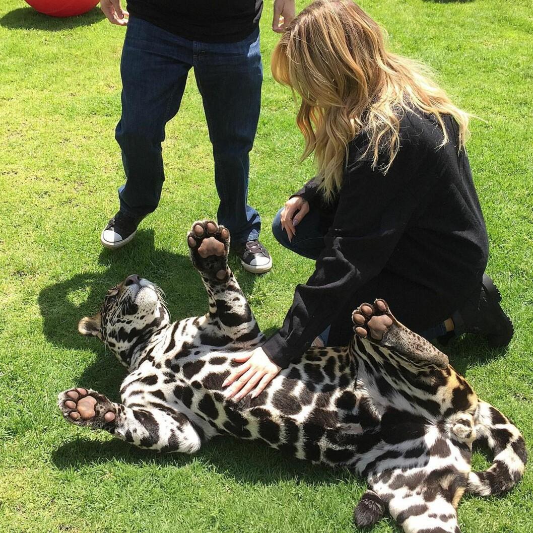 SØTT: - Dette har jeg drømt om, skrev Khloe Kardashian til det søte bildet med jaguaren.  Foto: Instagram