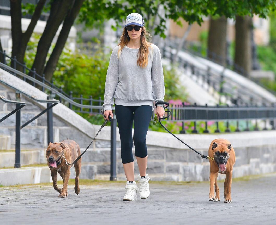 TREKLØVER: Jessica Biel på luftetur med hunden sin Tina (t.v) og en av ektemannens boxere i New York. Foto: FameFlynet