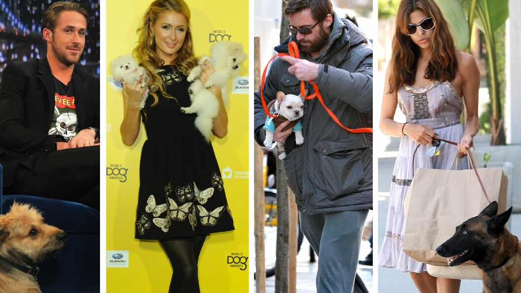 MENNESKETS BESTE VENN: Ryan Gosling, Paris Hilton, Hugh Jackman og Eva Mendes har alle en ting til felles; De elsker hunder. Foto: NTBscanpix