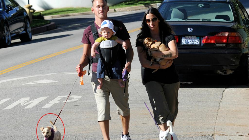 KJEMPER OM HUNDEN: Alanis Morissette og ektemannen Mario Treadway fikk sjokk da de kom hjem og oppdaget at hunden Circus (nede til venstre) hadde forsvunnet med hushjelpen. Foto: Steve Matthews/NPG.com