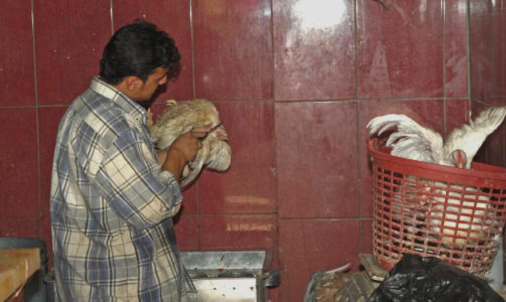 HALAL: En lokal slakter gjør klar kveldens middag og utfører sitt arbeid i tråd med muslimske ritualer.