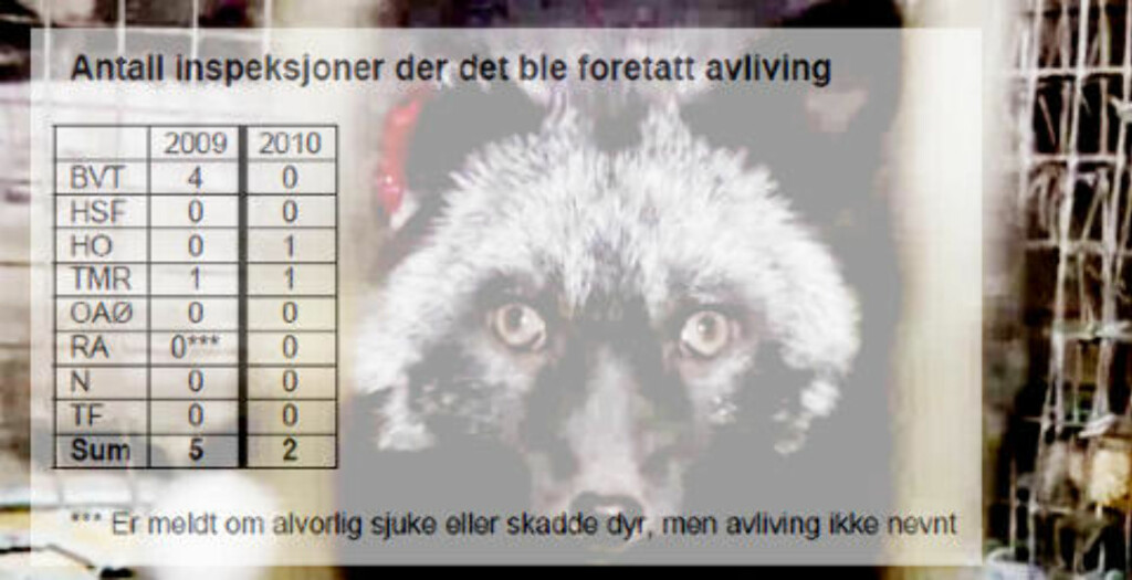 MÅTTE AVLIVE: Mattilsynets kontrollører måtte avlive en rekke dyr ved sju anledninger i 2009 og 2010. Foto: Nettverk for dyrs frihet. Tall: Mattilsynet