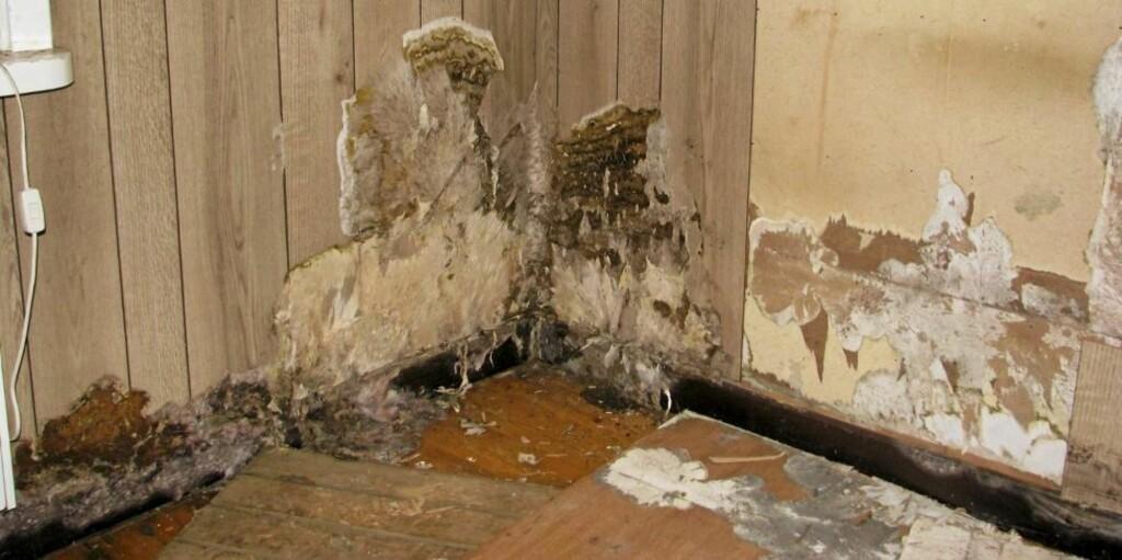 STERKT ANGREPET: Av råtesopper som går til angrep på boligen er ekte hussopp den verste. Bildet viser avdekking av omfattende hussoppskader.  FOTO: Mycoteam AS