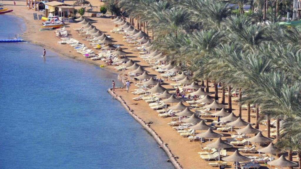 FORTSATT BADEFORBUD Strendene i Sharm el Sheikh er praktisk talt tomme på grunn av haiangepene de siste dagene. Foto: Scanpix