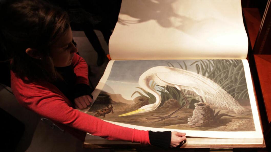 DYRT PAPIR: En ansatt ved ausjonshuset Sotheby's blar i John James Audubon's «Birds of America», verdens dyreste bok.  Foto: SCANPIX /REUTERS/Suzanne Plunkett