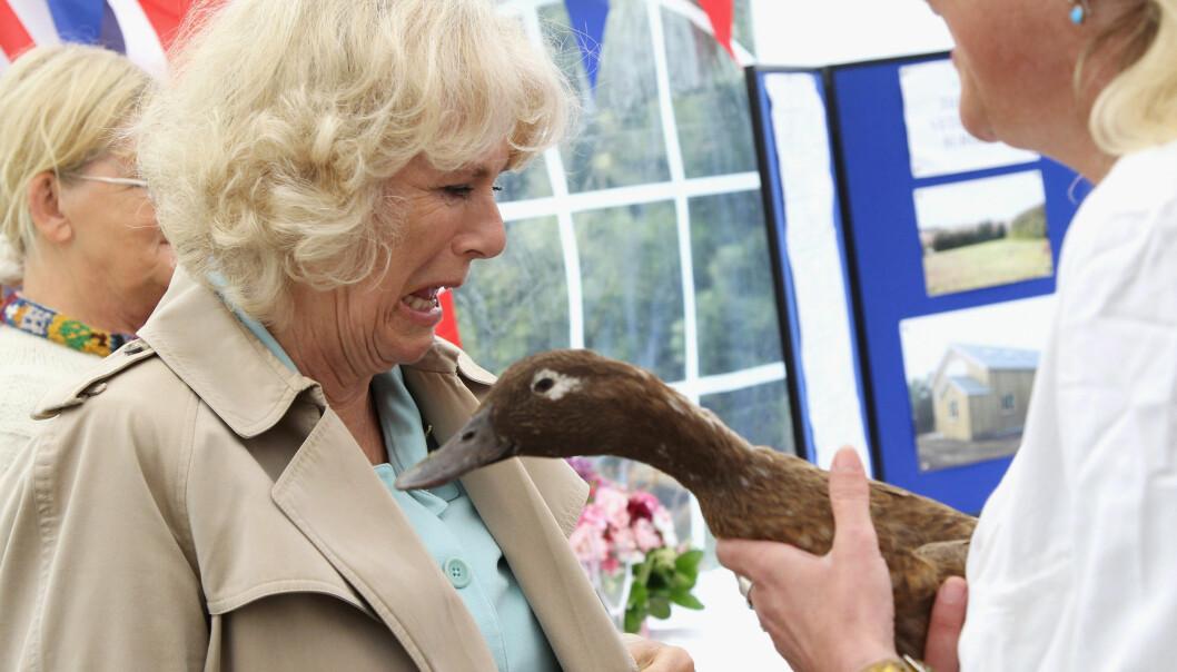 Dette ble for mye for Camilla