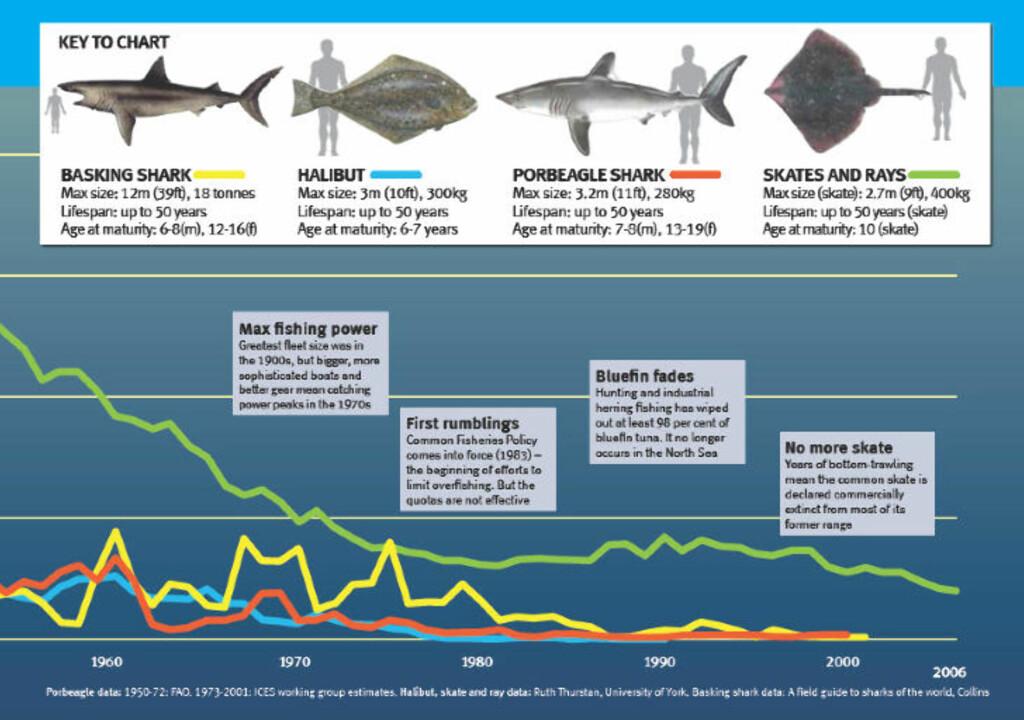 DYSTERT: Utviklingen av store havfisk siden 1960. Kilde: wildlifetrusts.org