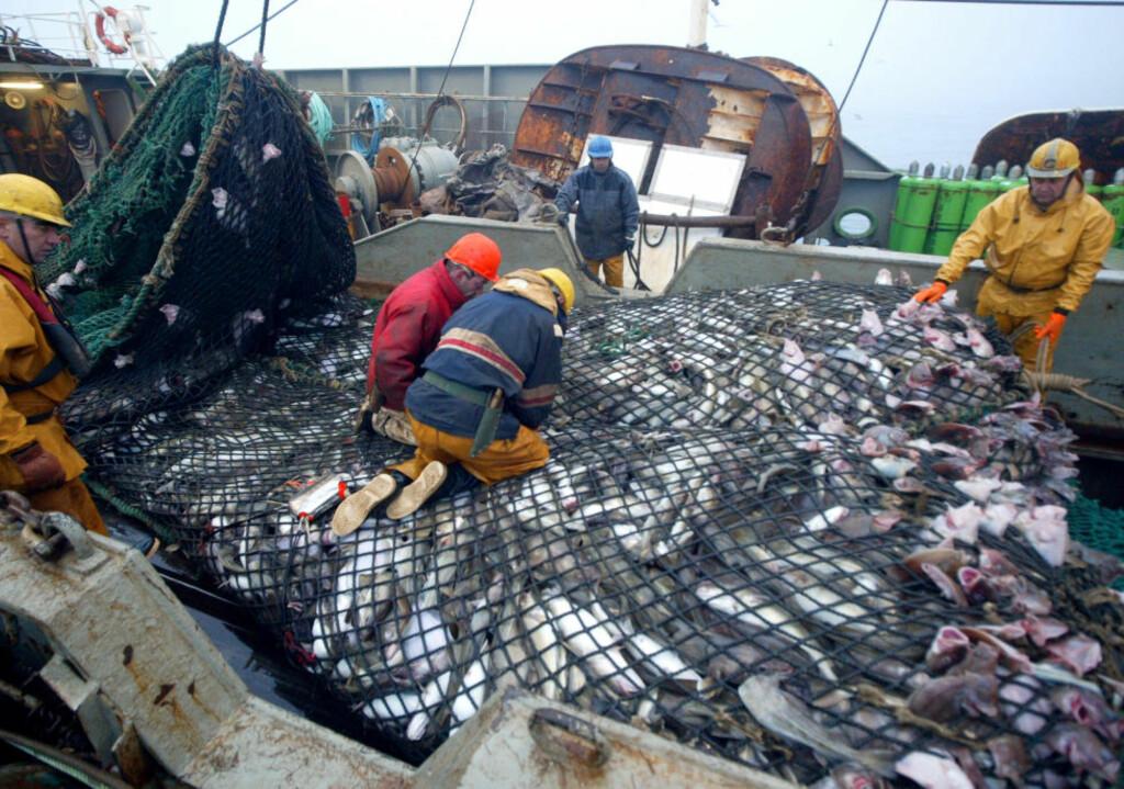 IKKE FORNØYDE: Fiskerne i EU er ikke fornøyde med kvotekuttene. Forskere og miljøvernere er heller ikke fornøyde med kuttene, som er omlag halvparten av hva de bør være, for at fiskebestandene skal være stabile. Her er franske fiskere med en last torsk. Foto: AFP