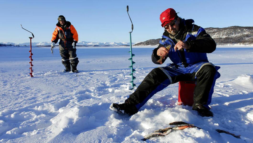 <strong>MORGENFISKE:</strong> Det beit godt om morgenen da Gunnar Bratterud (48) (foran t.h.) og Tore Hansen (55) trosset minus 28 grader. Foto: OLE C.H. THOMASSEN