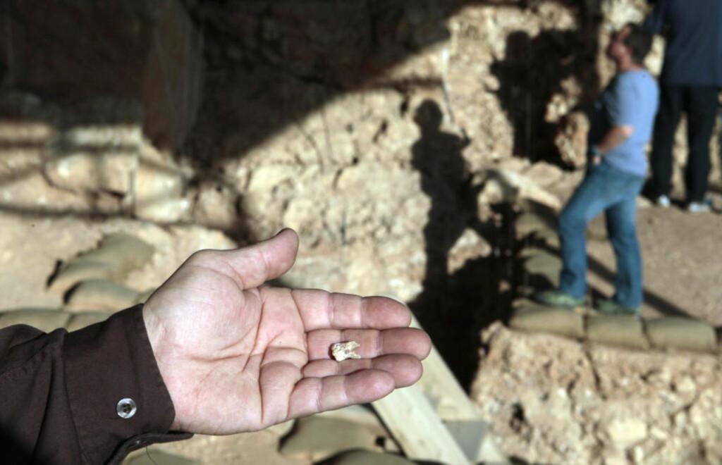 OPPSIKTSVEKKENDE FUNN: Denne tanna, funnet på en utgravingsplass i Israel i dag, slår beina under teorien om at det moderne mennesket - Homo sapiens - hadde sitt utspring i Afrika for rundt 200 000 år siden. Foto: REUTERS/Baz Ratner