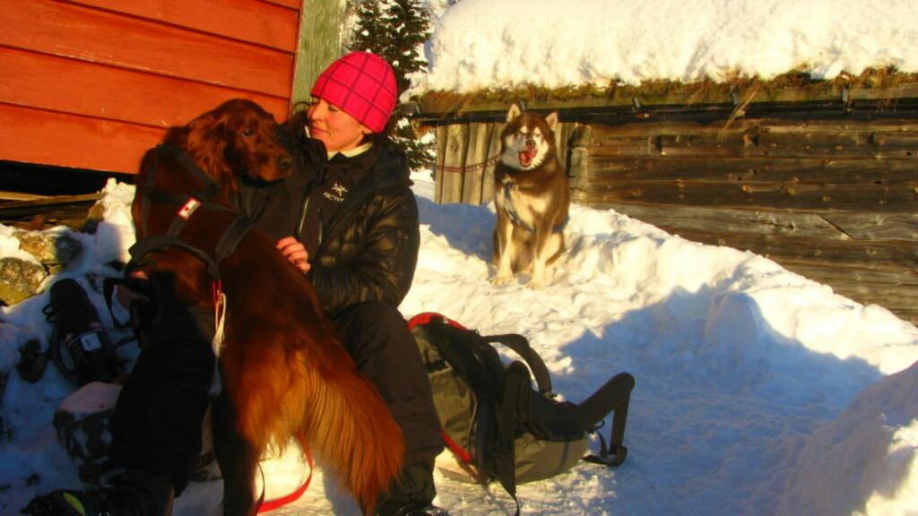 REDDET: Siden første juledag har Irsk-setteren Diesel (4) stått fast på ei fjellhylle 670 meter over Stryn Sentrum. Nå er han endelig på vei ned fjellet til matmor Siri Sørdal sammen med sine redningsmenn. Foto: PRIVAT