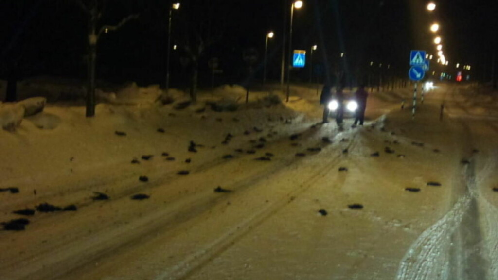 MUSTISK FUGLEDØD: Ifølge politiet er det et 40-talls fugler som er døde. Årsaken til massedøden er uklar. Foto: Expressen/Leserbilde