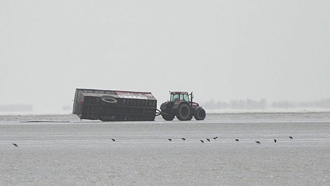 <strong>TRE DREPT:</strong> En traktor lastet med turister veltet på Rømø i Jylland fredag. Tre personer omkom og 36 ble skadet da ulykken inntraff. Traktoren frakter turister rundt på sandbanken.  Foto: Jesper Kristensen / Scanpix
