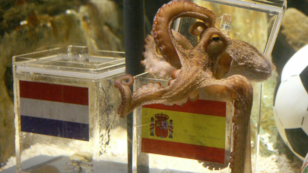 <strong>VALGTE SPANIA:</strong> Og som historien viser: Blekkspruten Paul, eller Paolo som italienerne kaller ham, fikk rett. Foto: AFP.