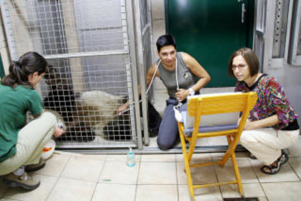 <strong>REGELMESSIG:</strong>Veterinærene i Tiergarten har tatt ultralyd av Yang Yang regelmessig de siste månedene. Foto: Tiergarten Schönbrunn
