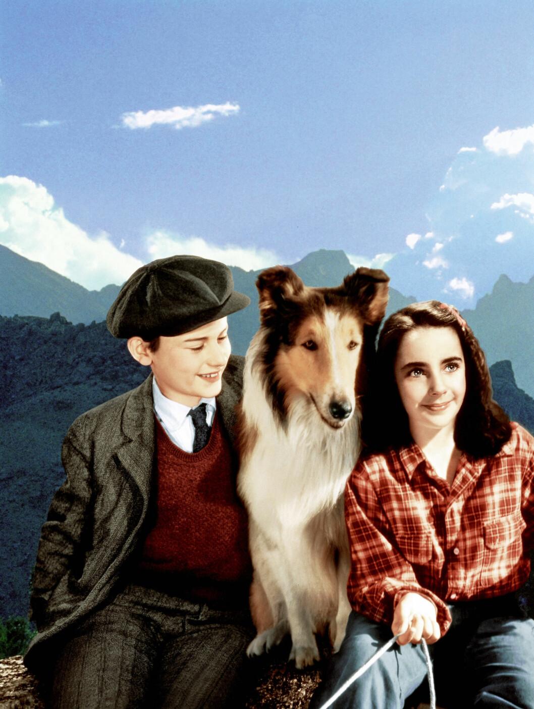 <strong>1943:</strong> Også dette bildet er fra Lassie Come Home, med barnestjernen Elizabeth Taylor.  Foto: Stella Pictures