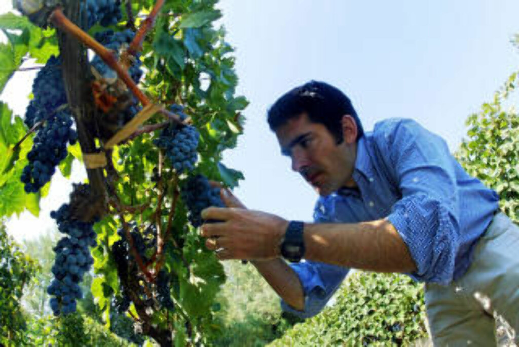 BERØMT: Chile er berømt for sin vin. Her sjekker chileneren German Layon vinranker med Cavernet Sauvignon sør for Santiago i 2005. MARTIN BERNETTI/AFP