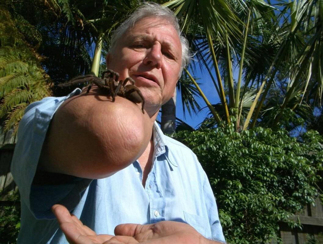<strong>UTFORSKER NATUREN:</strong> Sir David Attenborough. Foto: NRK